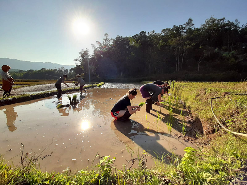 Planting crops in the paddy fields